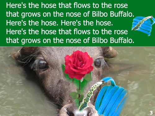 Buffalo03 copy