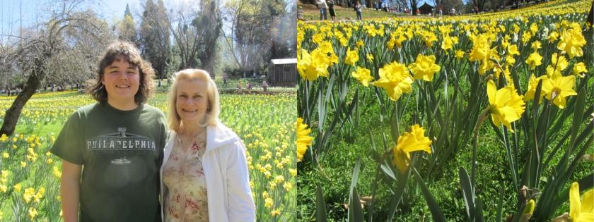 DaffodilHil