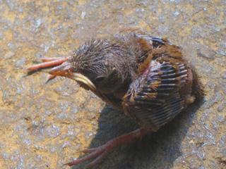 BirdAlone1