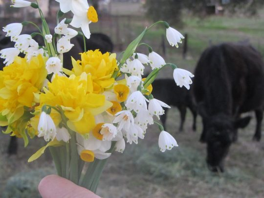 Taken last spring at the ranch; cows and wild flowers are re-born there every year.