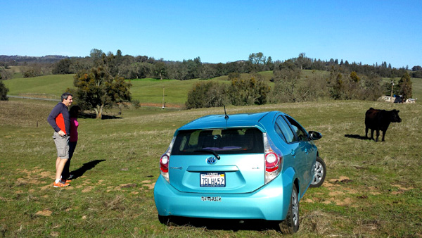 Yes, I drove my pretty Prius out into the field with dad riding shotgun to see his cows!