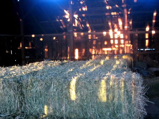 The barn my ancestors built still houses the hay for my dad's cows with lots of light shining through these old walls!