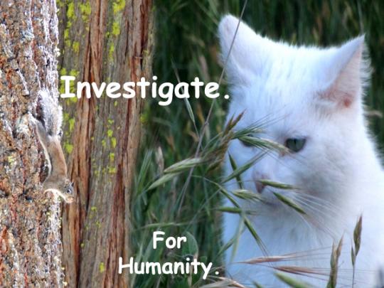 116.Investigate