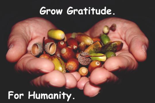 94.GrowGratitude