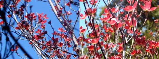 Blooms2