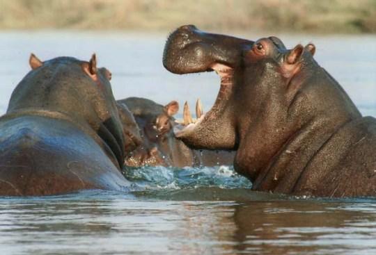 Happy Hippos ~ Heartful Home ~ Creative Spirit Families