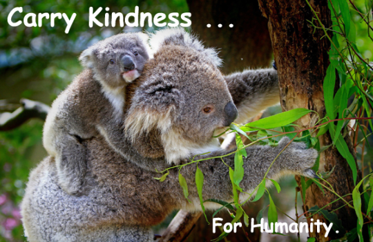 148.CarryKindness