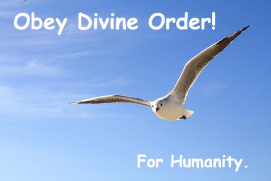 208.DivineOrder
