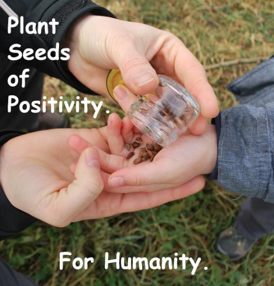 214.PlantSeeds