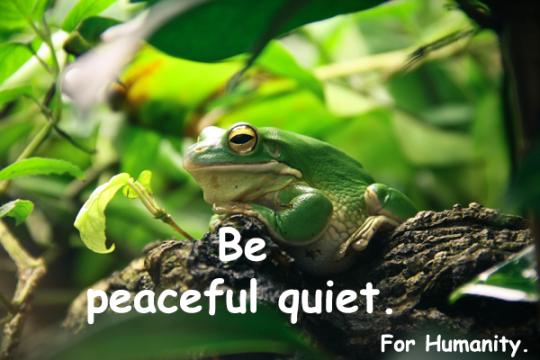 225.PeacefulQuiet