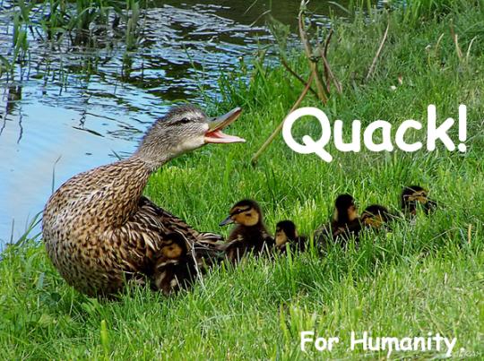 237.Quack