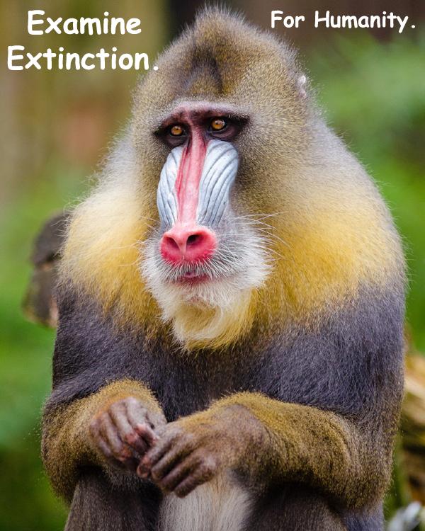 334-extinction