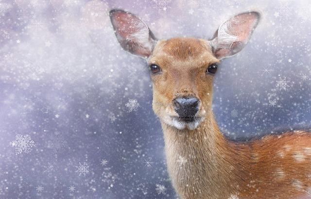 roe-deer-1888115_640